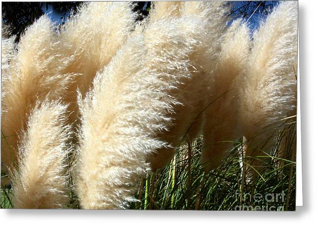 Greeting Card featuring the photograph Majestic Pampas Grass by Merton Allen
