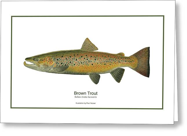 Male Brown Trout Greeting Card by Paul Vecsei