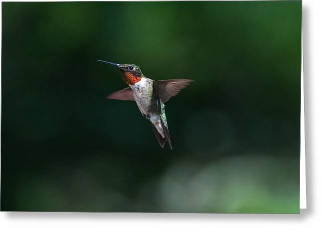 Male Ruby Throated Hummingbird Greeting Card