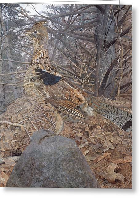 Male Ruffed Grouse In The Forest Greeting Card by Gerald Thayer