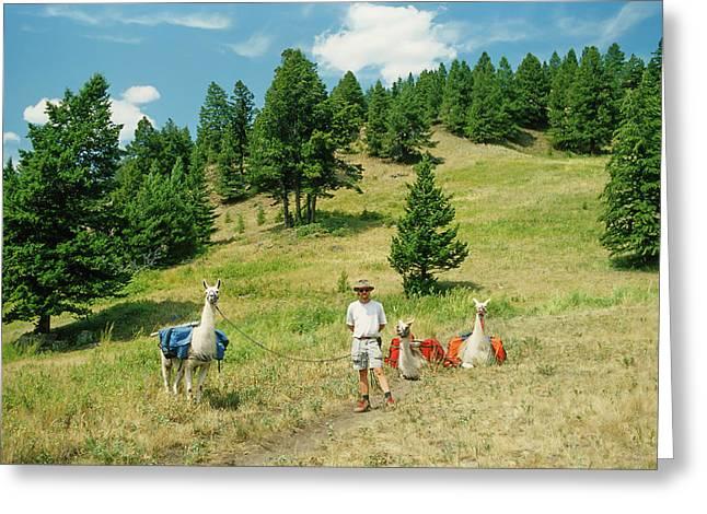 Man Posing With Llamas In A Beautiful Grassy Meadow Greeting Card