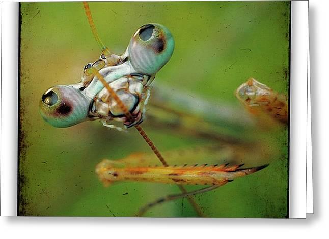 Mantis 19 Greeting Card by Ingrid Smith-Johnsen