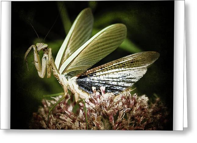 Mantis 22 Greeting Card by Ingrid Smith-Johnsen