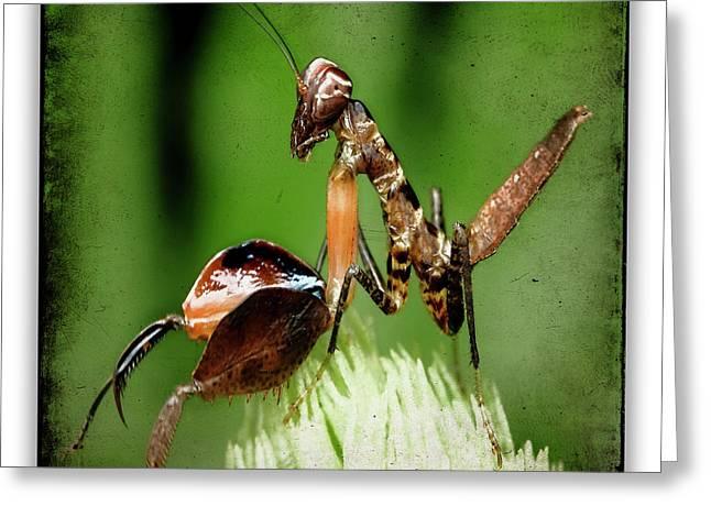 Mantis 9 Greeting Card by Ingrid Smith-Johnsen
