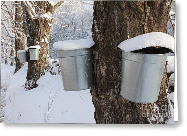 Maple Syrup Collecting Greeting Card by Larry Landolfi