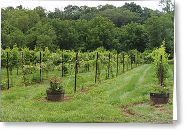 Maryland Vineyard Panorama Greeting Card