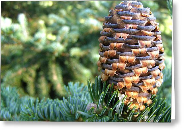 Greeting Card featuring the photograph Masterful Construction - Spruce Cone by Angie Rea