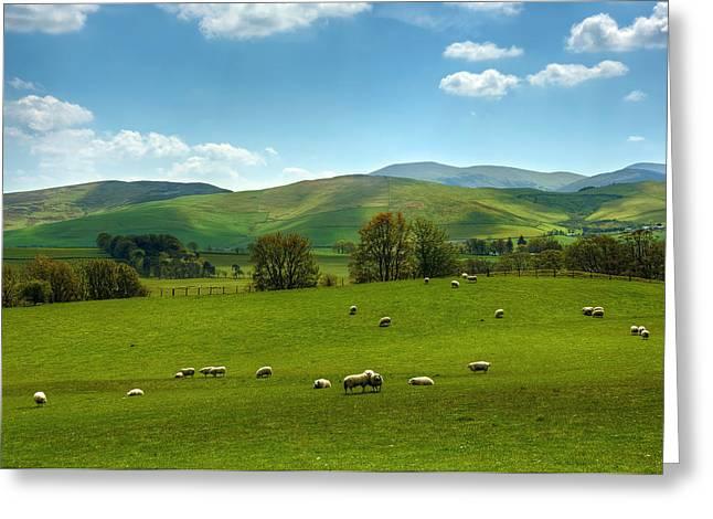 Meadow Field Greeting Card by Svetlana Sewell
