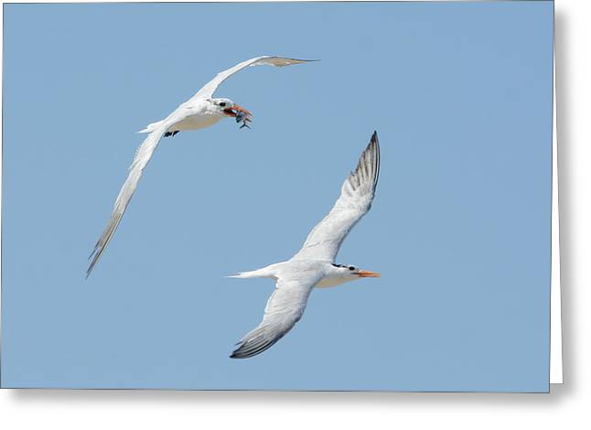 Meal On The Fly Greeting Card