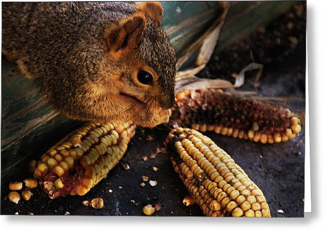 Fox Squirrel Greeting Cards - Miss Messy Greeting Card by Kathleen Stephens