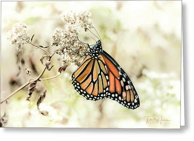 Monarch #1 Greeting Card