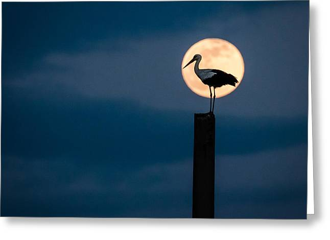 Moon Stork Greeting Card by Catalin Pomeanu