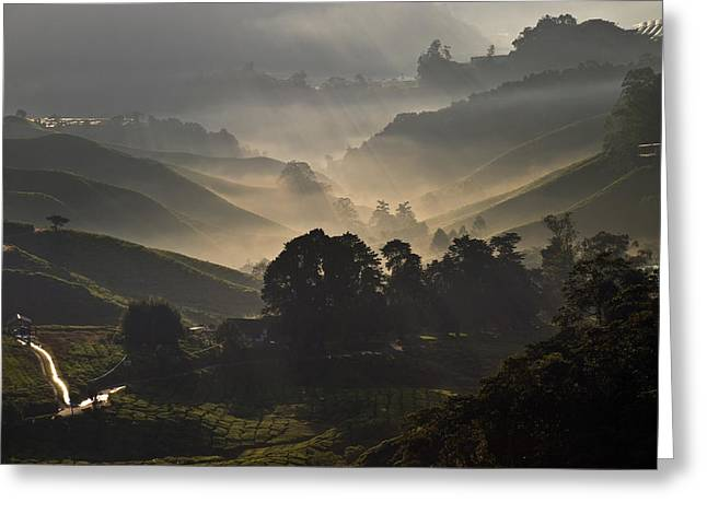 Morning At Cameron Highlands Greeting Card