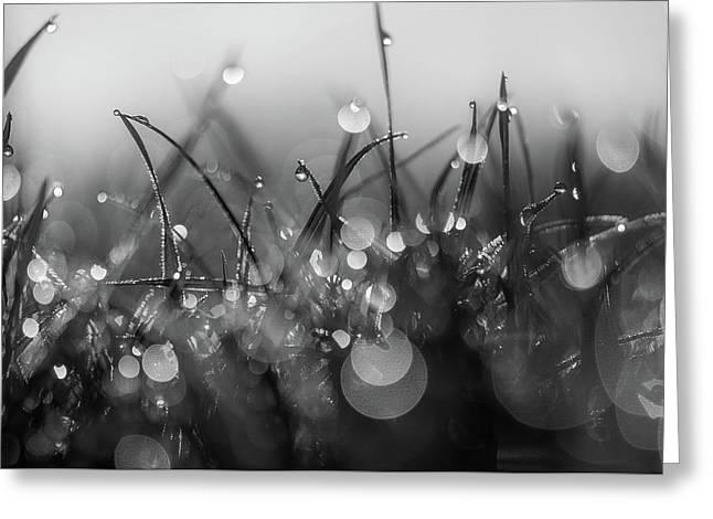 Morning Dew Greeting Card by Gabriela Neumeier