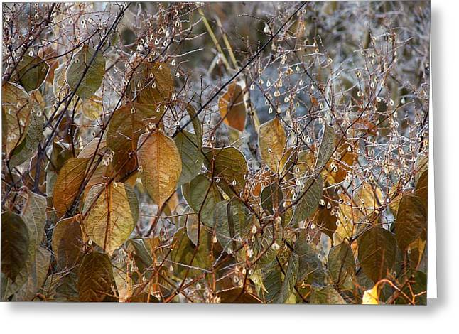 Morning Frozen Greeting Card by JAMART Photography