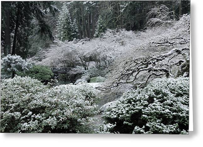 Morning Snow In The Garden Greeting Card by Don Schwartz