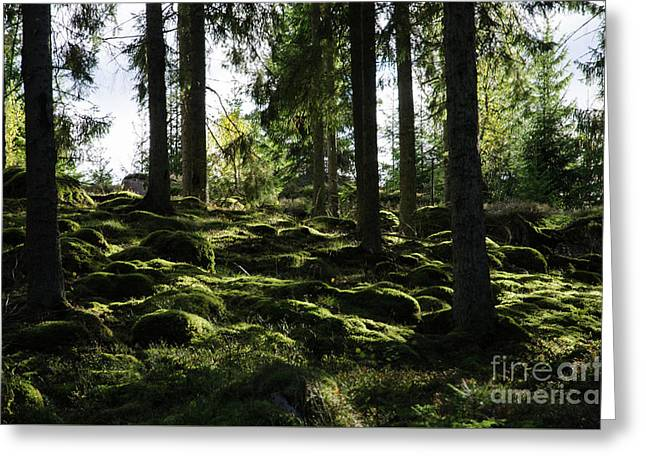Greeting Card featuring the photograph Mossy Rocks by Kennerth and Birgitta Kullman