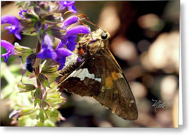 Moth Snack Greeting Card