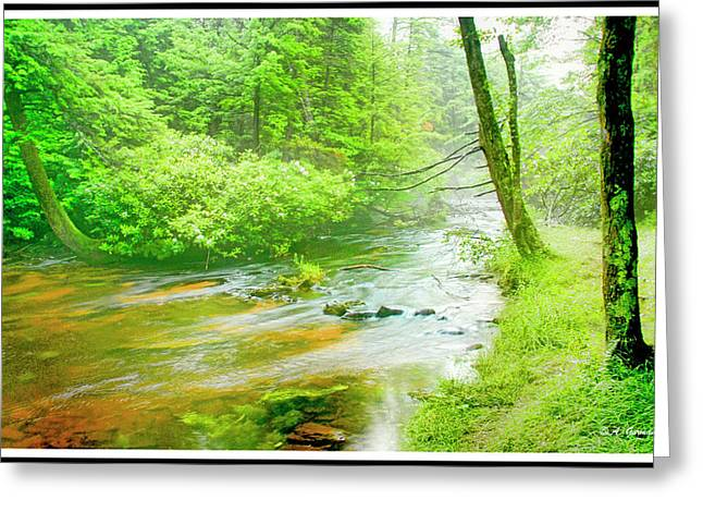 Mountain Stream, Pocono Mountains, Pennsylvania Greeting Card