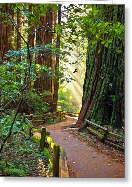 Muir Woods Greeting Card by Patricia Stalter