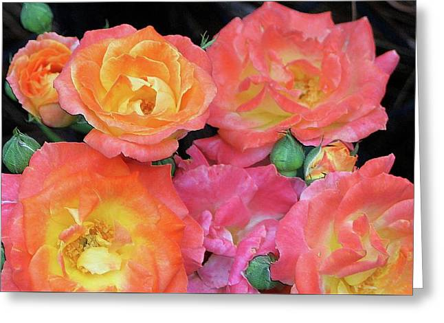 Multi-color Roses Greeting Card