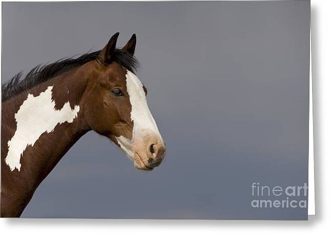 Mustang Yearling Greeting Card