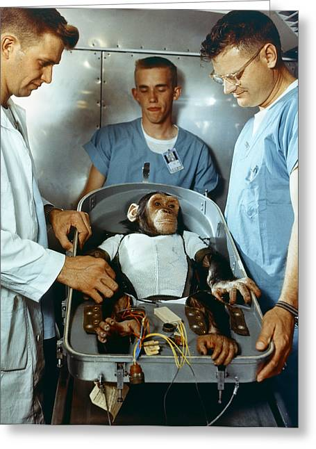 Nasa Chimpanzee, 1961 Greeting Card
