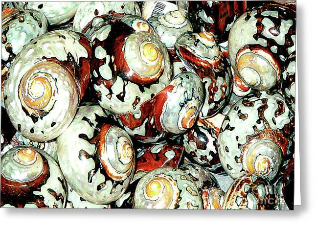 Greeting Card featuring the photograph Naturally Colored Seashells - Florida Key's Exhibit by Merton Allen