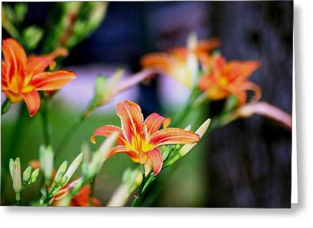 Nature 1 Greeting Card by Paul SEQUENCE Ferguson             sequence dot net