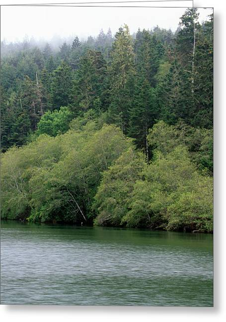 Navarro River Greeting Card by Soli Deo Gloria Wilderness And Wildlife Photography
