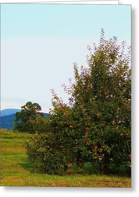 Nc Mountain Apples Greeting Card by Cindy Gacha