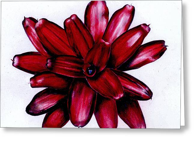 Neoregelia 'christmas Cheer' Greeting Card by Penrith Goff