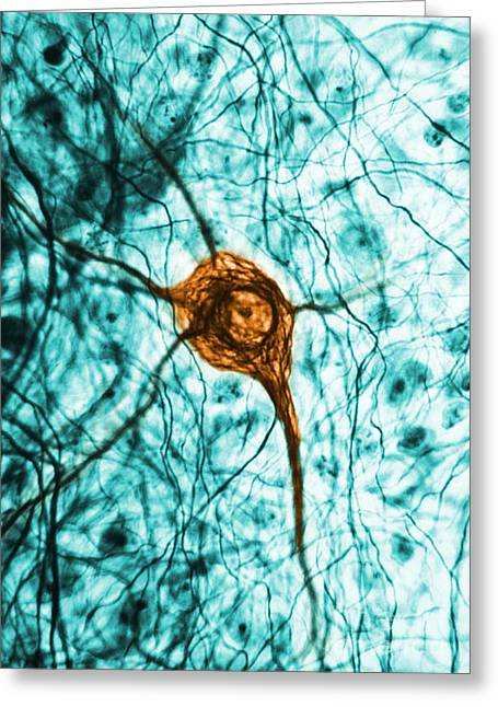 Neuron, Tem Greeting Card