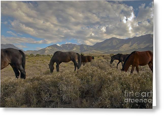 Nevada Greeting Card by Glenn Vidal