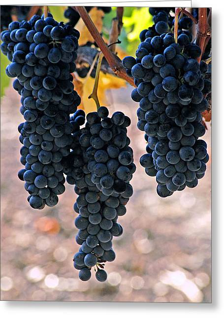 Greeting Card featuring the photograph New Grapes by Gary Brandes