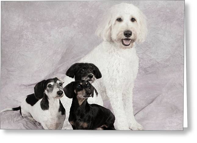 Fur Friends Greeting Card by Erika Weber