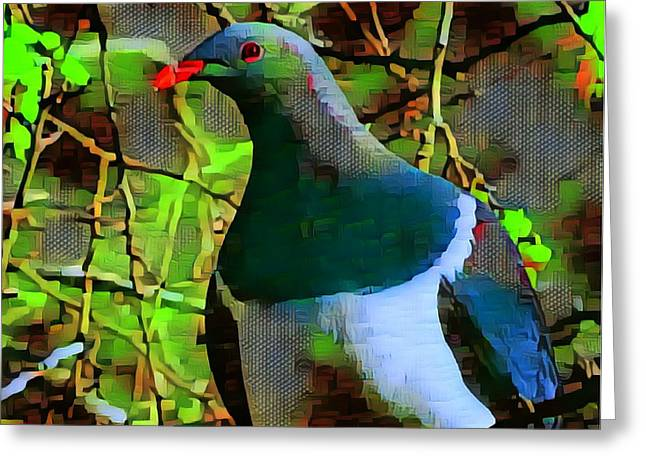 New Zealand Wood Pigeon Greeting Card