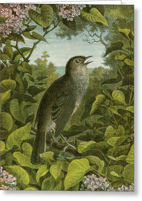 Nightingale Greeting Card by English School