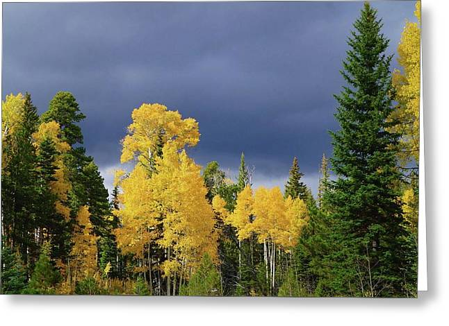 Greeting Card featuring the photograph North Rim Fall  by Broderick Delaney