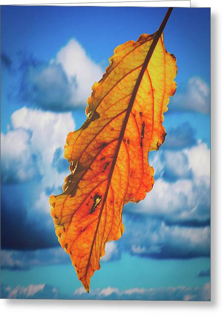 October Leaf B Fine Art Greeting Card