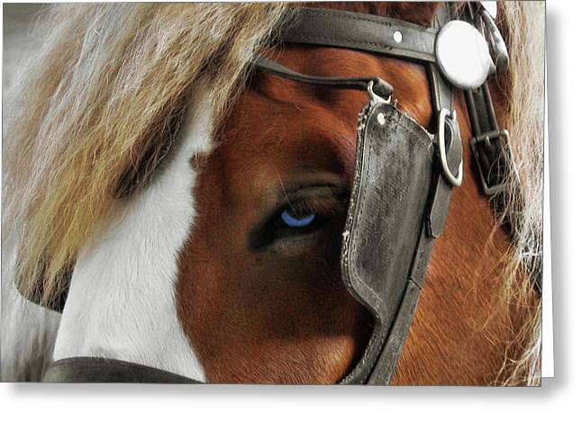 Old Blue Eyes Greeting Card by Dressage Design