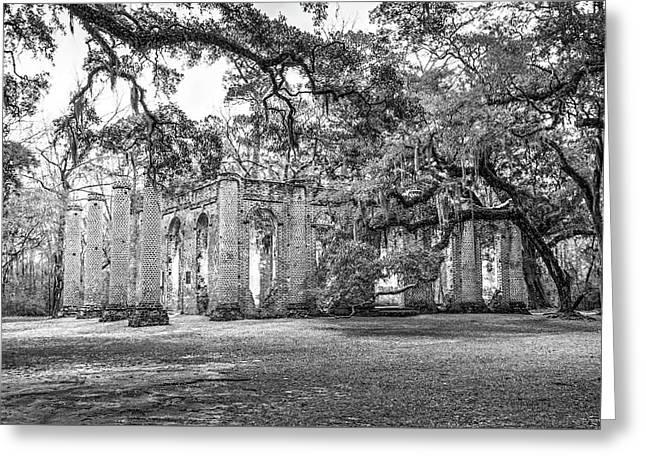 Old Sheldon Church - Tree Canopy Greeting Card