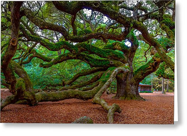 Old Southern Live Oak Greeting Card