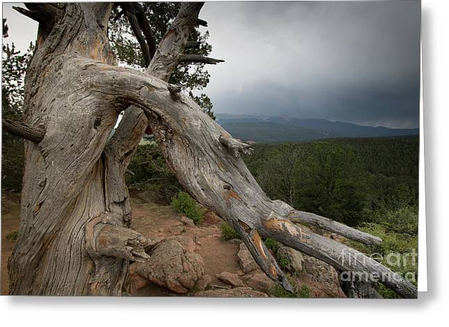 Old Tree On The Mountain Greeting Card