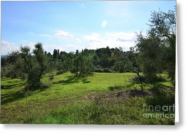 Olive Grove In The Countryside Of Tuscany Greeting Card by DejaVu Designs