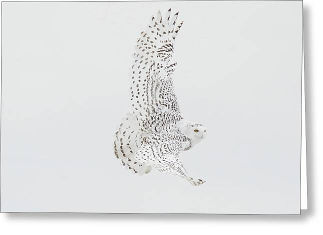 On The Move. Greeting Card