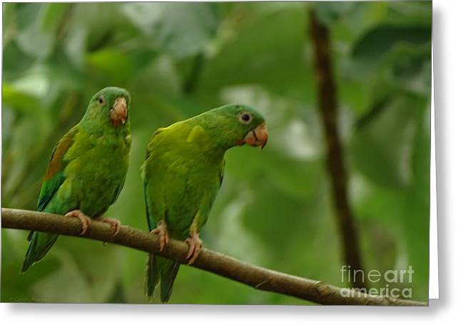 Orange -chinned Parakeets  Greeting Card