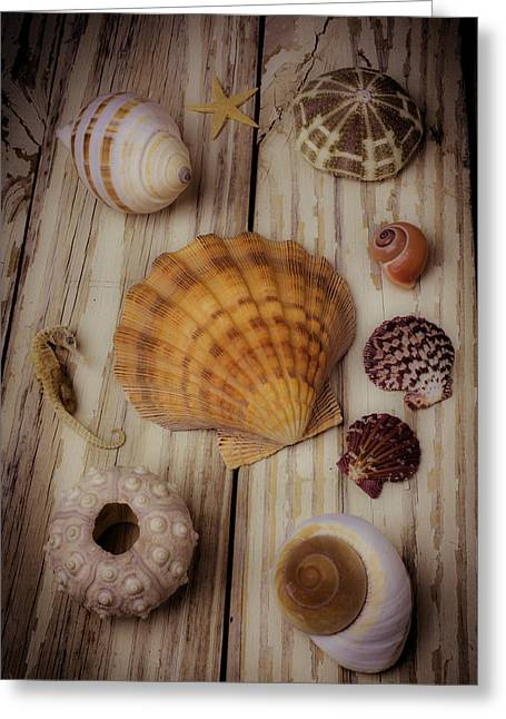 Orange Sea Shell Greeting Card