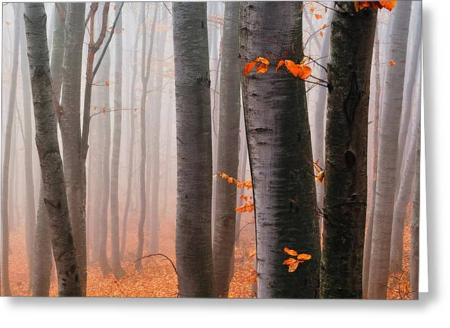 Orange Wood Greeting Card by Evgeni Dinev