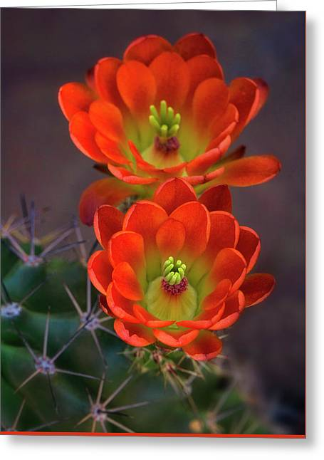 Greeting Card featuring the photograph Orange Ya Beautiful  by Saija Lehtonen